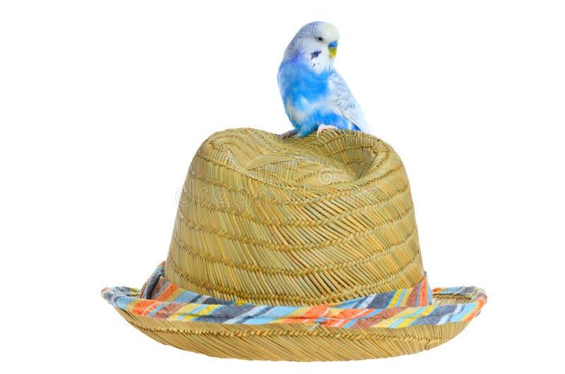 Papagei auf einem Strohhut lizenzfreie stockbilder
