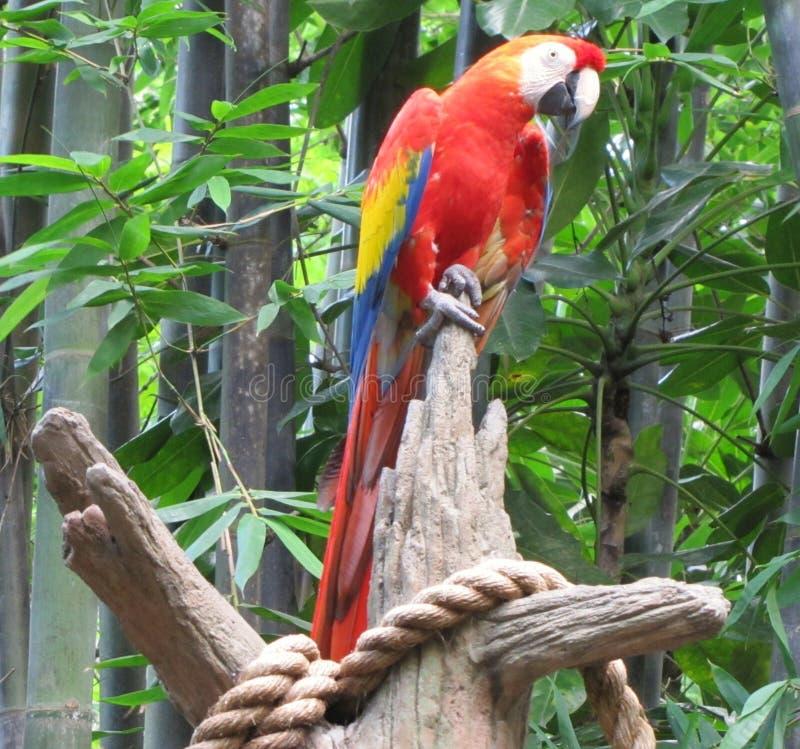 Papagei auf einer Stange lizenzfreie stockfotografie