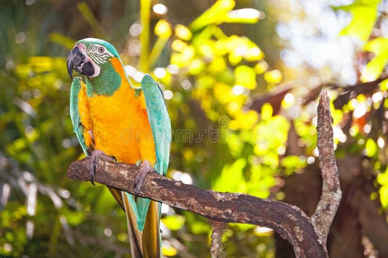 Papagei auf Zweig