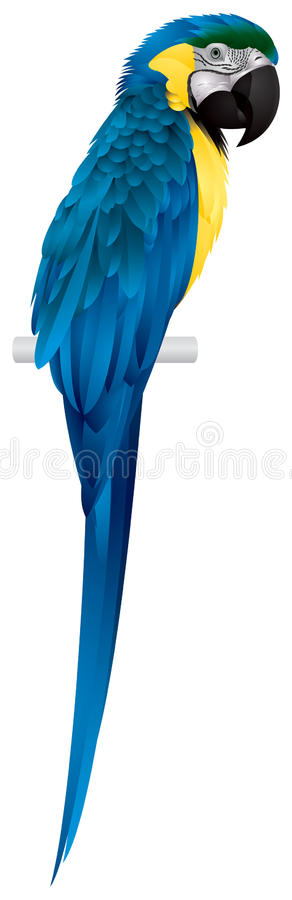 Papagei, Blau-und-Gelber Macaw vektor abbildung