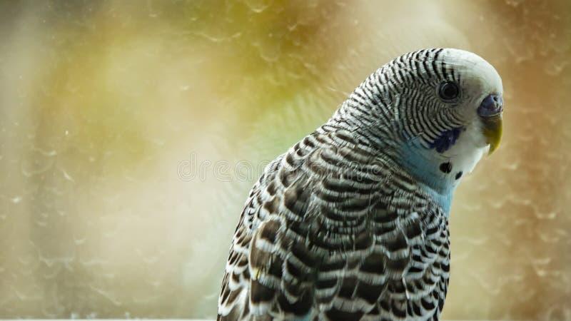 Papagei in der Natur lizenzfreie stockfotos