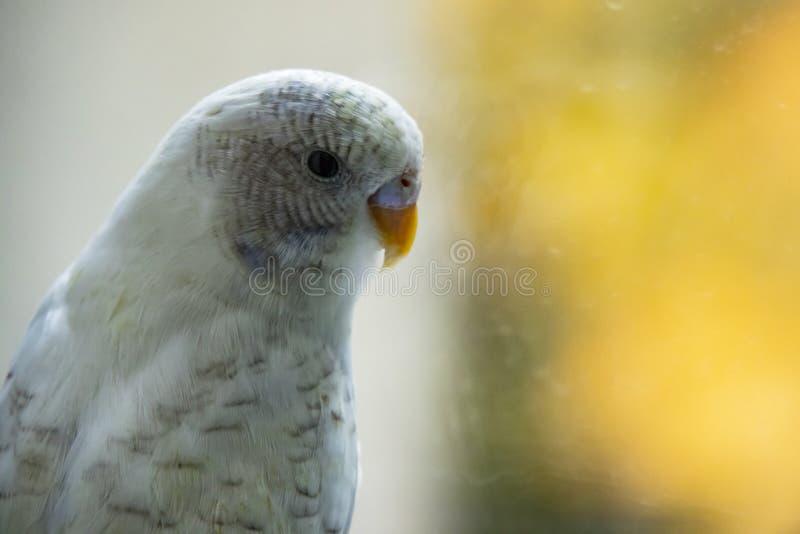 Papagei in der Natur stockbilder
