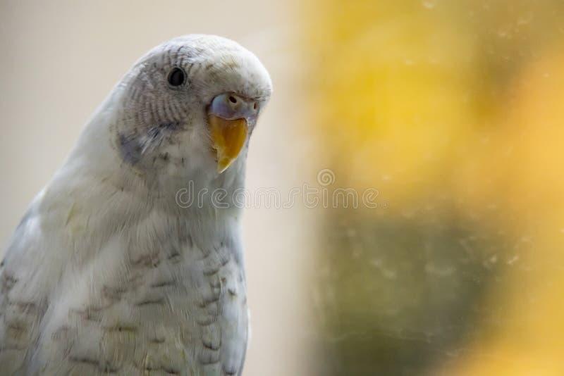 Papagei in der Natur lizenzfreies stockfoto