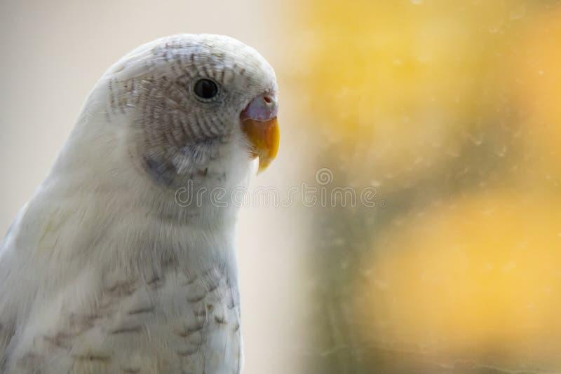 Papagei in der Natur stockbild