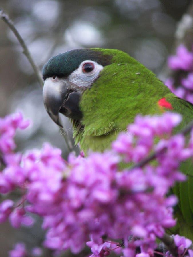Papagei im Baum lizenzfreie stockbilder