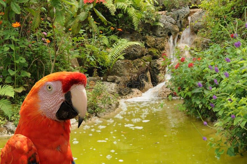 Papagei im Dschungel stockfoto