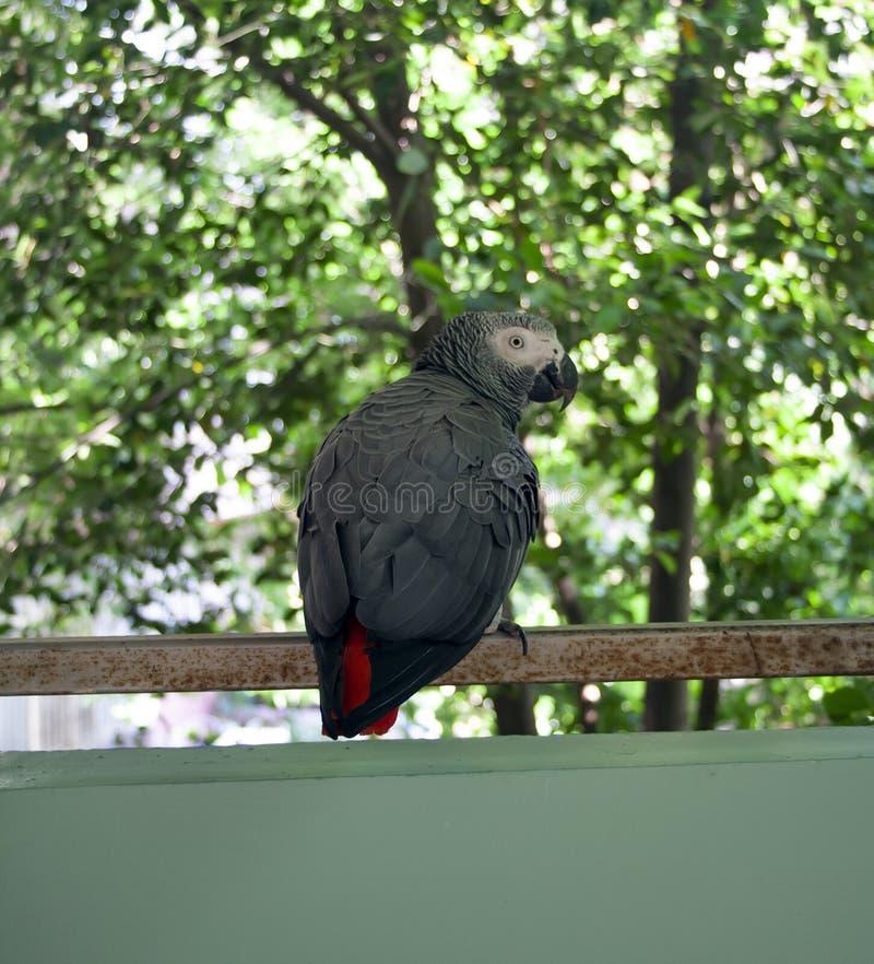 Papagei stockbilder