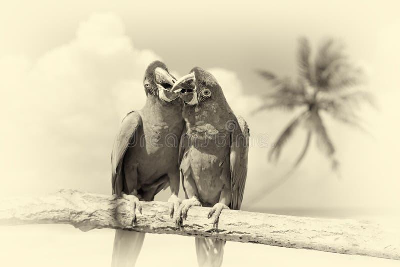 Papagei u. x28; Schweres Macaw& x29; auf Niederlassung auf tropischem Hintergrund weinlese stockbilder