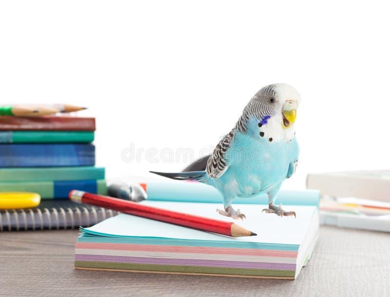 Papagei und Zubehör von der Schule stockfotos