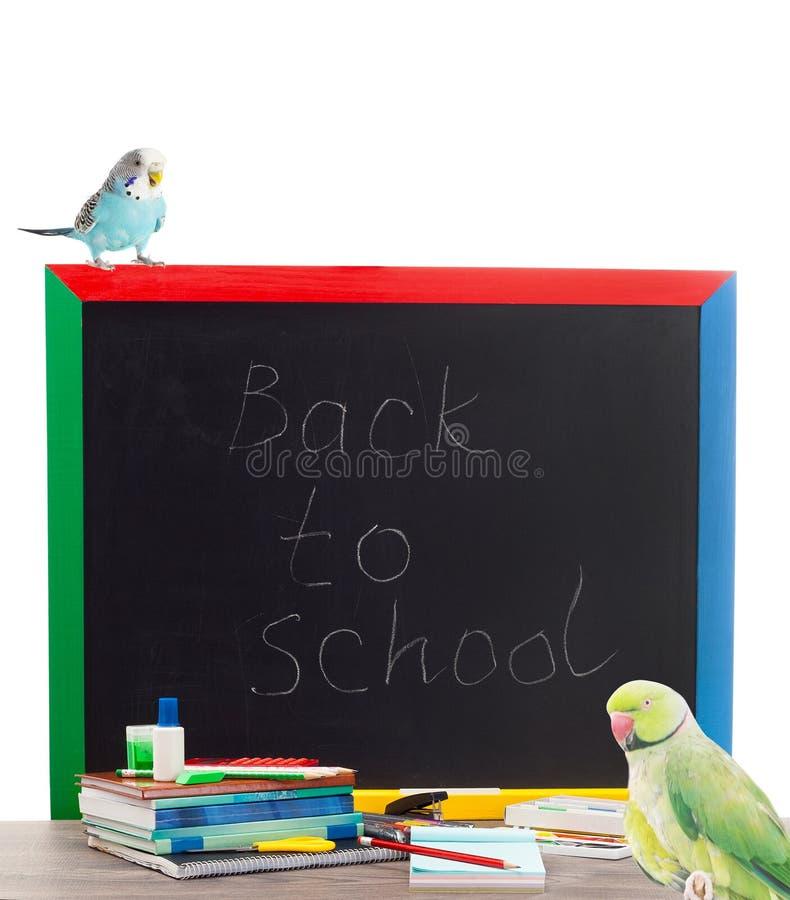 Papagei und Zubehör von der Schule lizenzfreies stockfoto