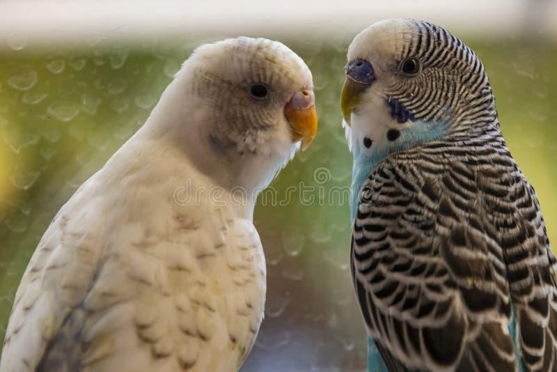 Papageien in der Natur lizenzfreies stockbild