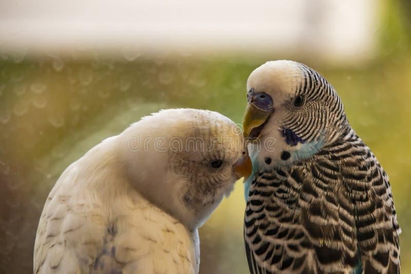 Papageien in der Natur stockfotos