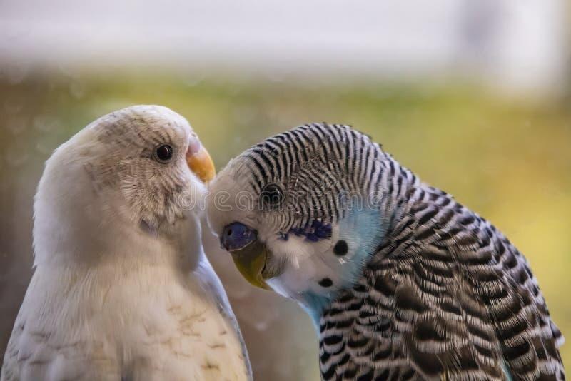 Papageien in der Natur lizenzfreie stockfotografie