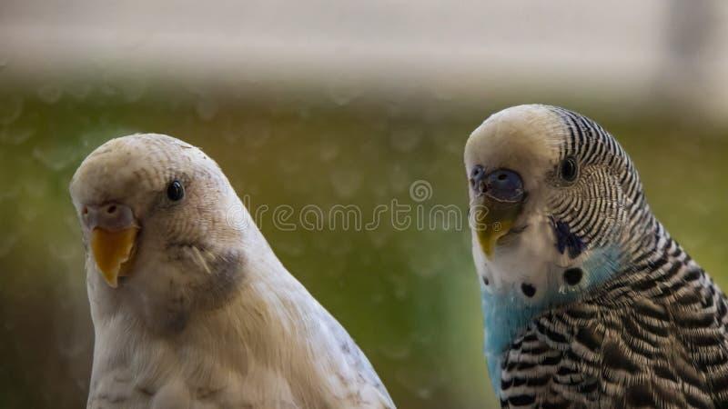 Papageien in der Natur lizenzfreie stockfotos