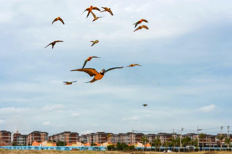 Papageien, die in den Himmel fliegen lizenzfreies stockbild