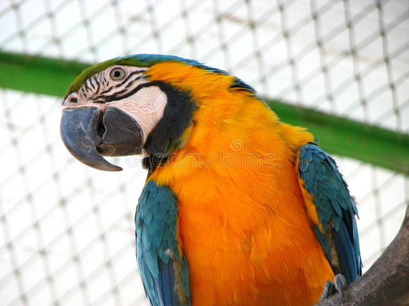 Papageien-Kakadu lizenzfreies stockfoto