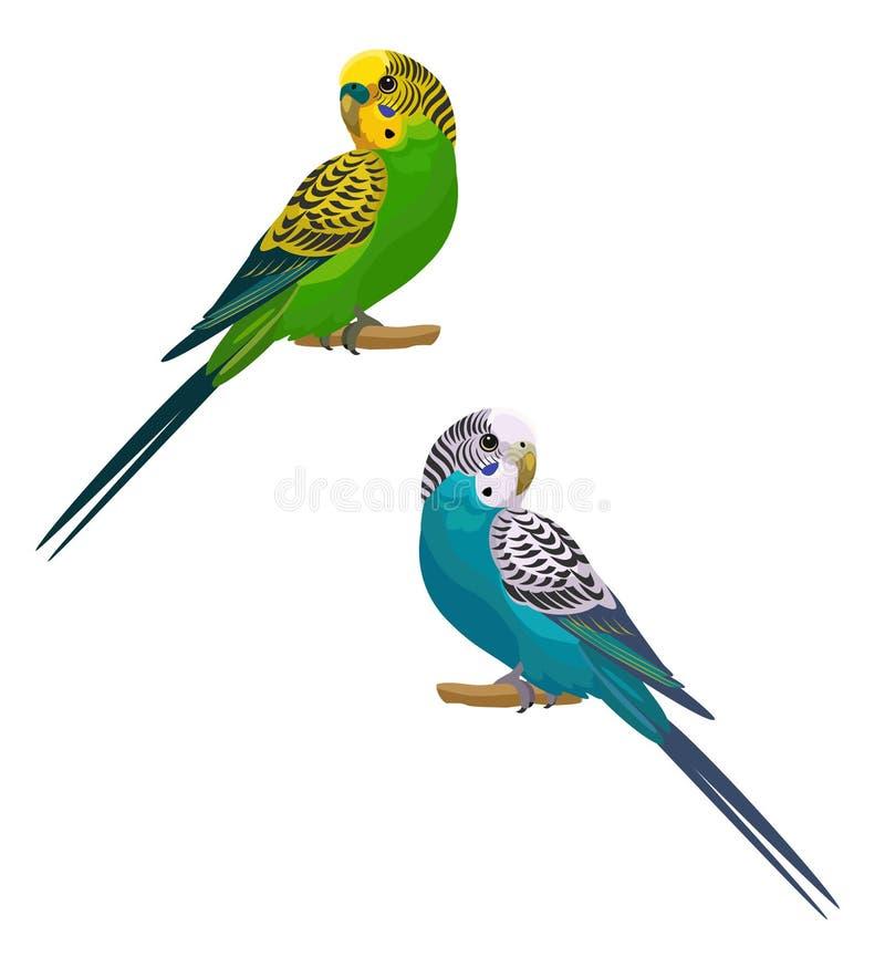 Papageien lokalisiert auf weißem Hintergrund Auch im corel abgehobenen Betrag stock abbildung