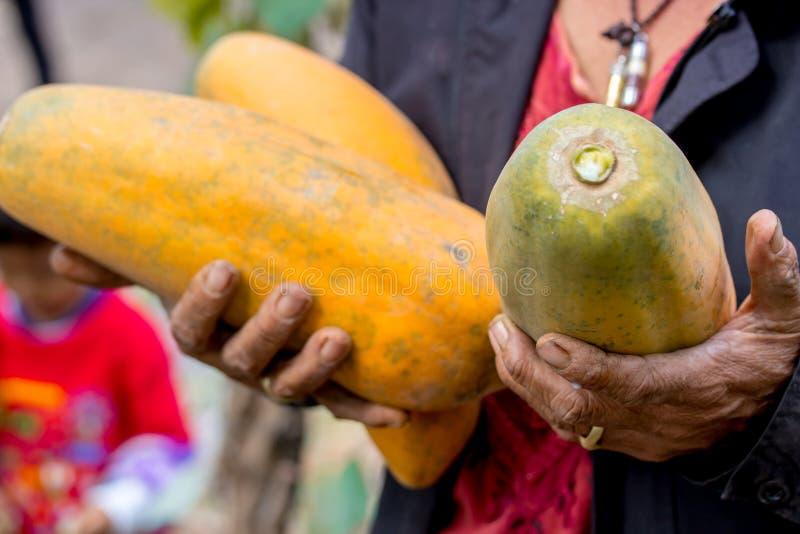 Papaia da terra arrendada da mulher, papaia fresca madura doce, alimento cru do vegetariano foto de stock