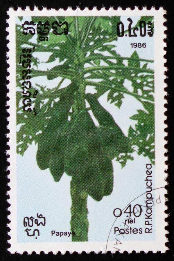 Papaja, of Carica papaja, een reeks van beelden` Exotische vruchten ` circa 1986 royalty-vrije stock afbeeldingen