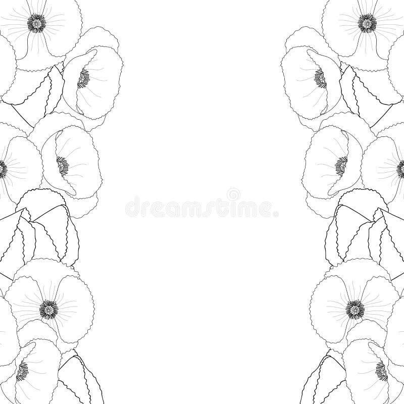 Papaver rhoeas Outline Border or common poppy,corn poppy,corn rose,field poppy,Flanders poppy or red poppy. Isolated on White Background. Vector Illustration stock illustration
