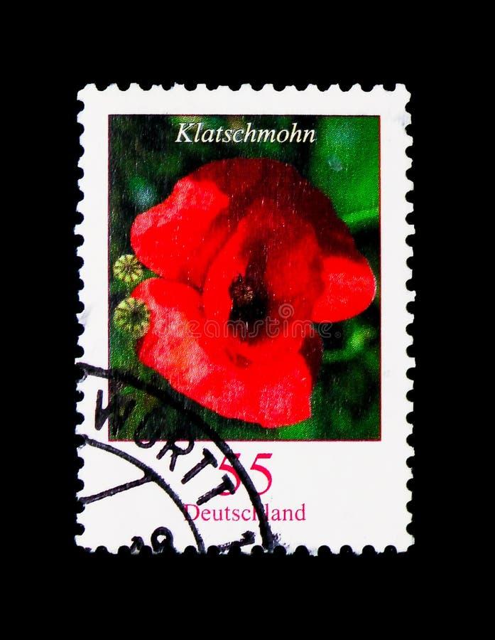 Papaver rhoeas - Poppy, Flowers serie, circa 2005 stock illustration