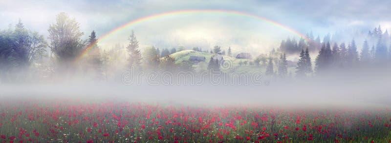 Papaveri alpini nei Carpathians immagine stock libera da diritti