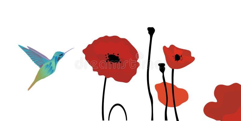 Papaveri dei colibrì di vettore illustrazione di stock