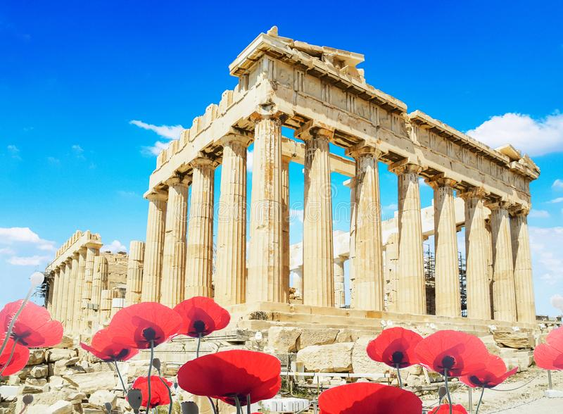 Papaveri rossi sping di stagione di Atene Grecia del Partenone fotografia stock libera da diritti