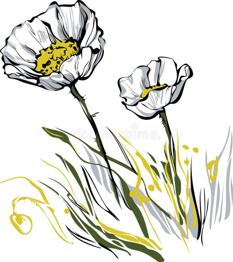 Papavero coltivato due illustrazione vettoriale