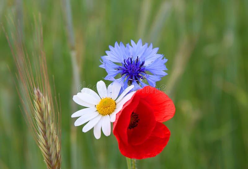 Papavero, cornflower e camomilla fotografia stock