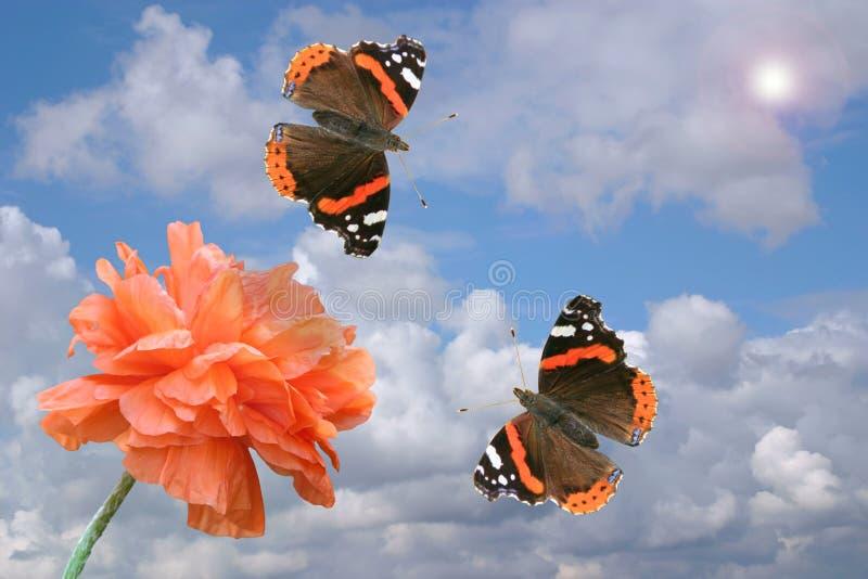Papavero e farfalle rossi fotografia stock libera da diritti