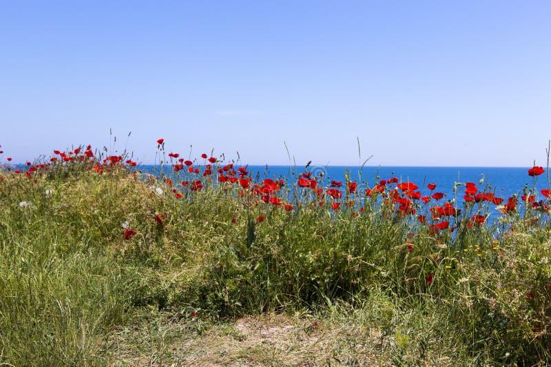 Papavero e Mar Nero fotografia stock libera da diritti