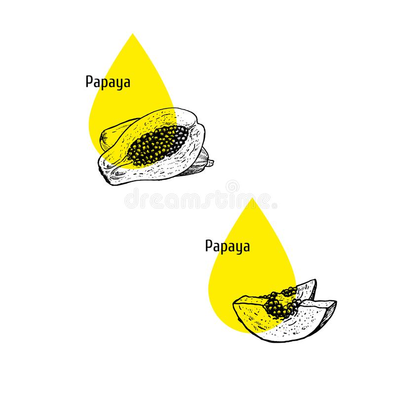 Papaya εικονίδια πετρελαίου καθορισμένα Συρμένο χέρι σκίτσο Εκχύλισμα των εγκαταστάσεων r ελεύθερη απεικόνιση δικαιώματος