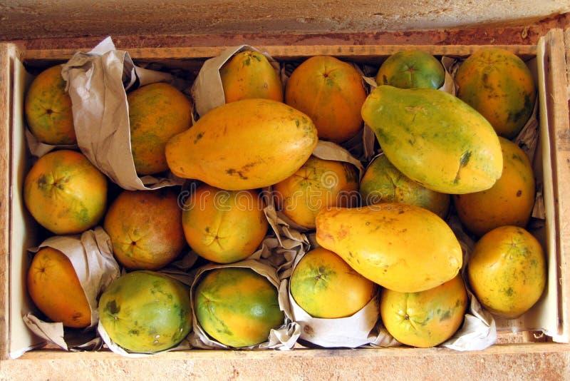 Download Papaya στοκ εικόνες. εικόνα από συστατικό, ακατέργαστος - 60348