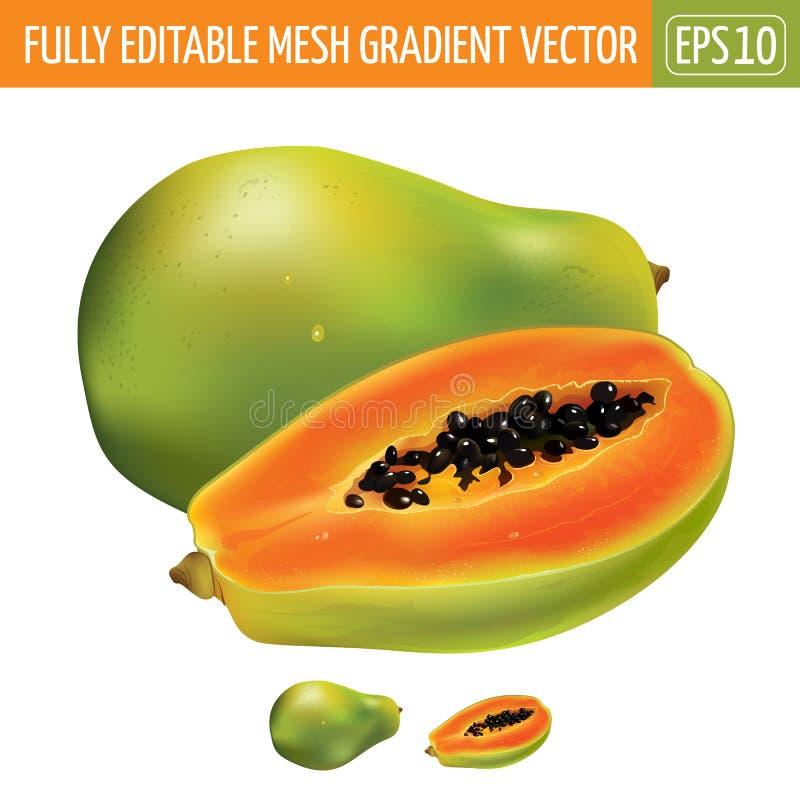 Papaya en el fondo blanco Ilustración del vector ilustración del vector