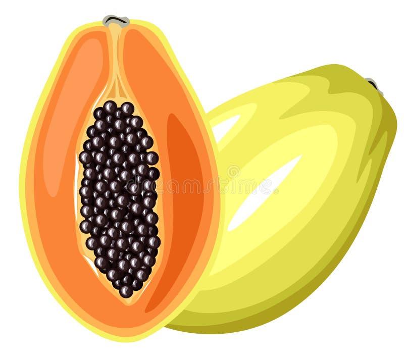 Papaya fruit stock illustration