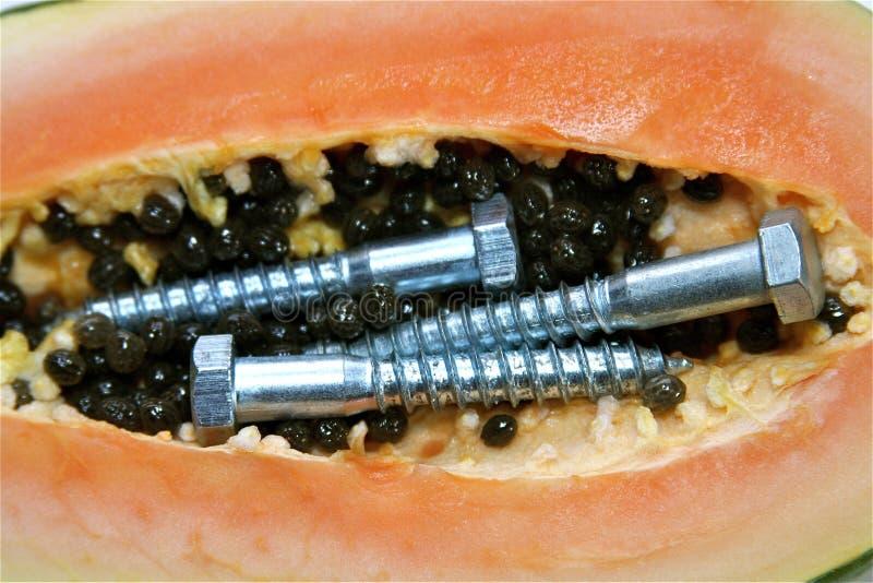 Papaya genético modificada imagen de archivo libre de regalías