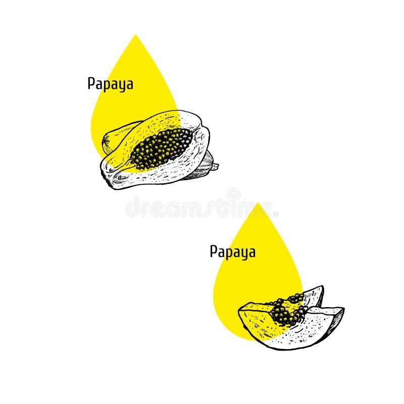 Papaya oil icons set. Hand drawn sketch. Extract of plant. Vector illustration. Papaya oil icons set. Hand drawn sketch. Extract of plant. Retro isolated symbols royalty free illustration