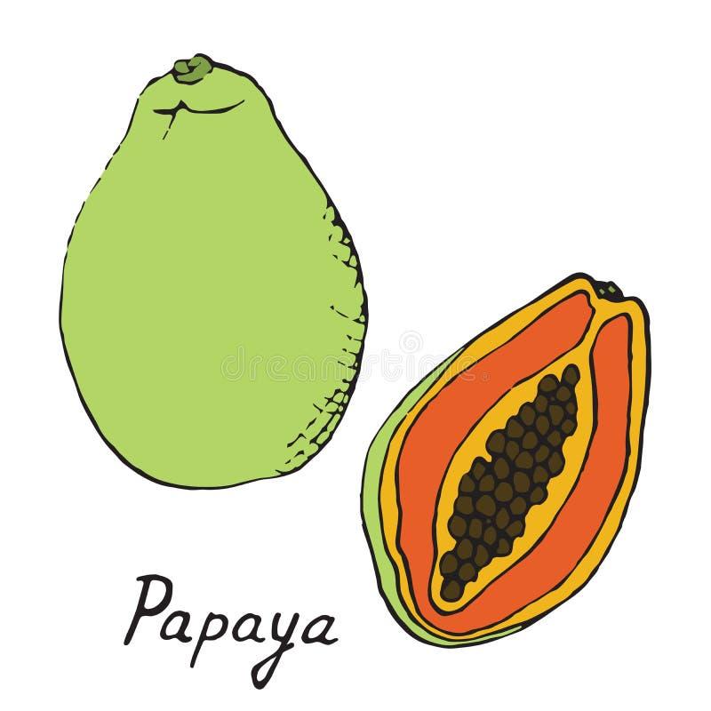 Papaya and sliced piece royalty free illustration