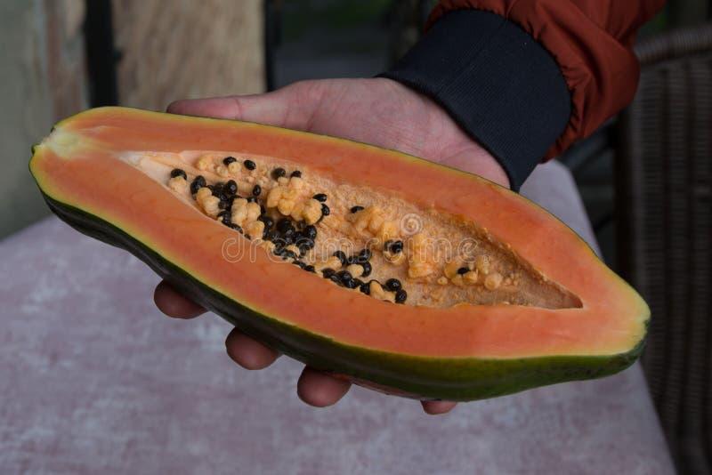 Papayaen Carica papaya ?r en exotisk, smaklig s?t frukt Manliga h?nder som rymmer papayafrukt half arkivbild