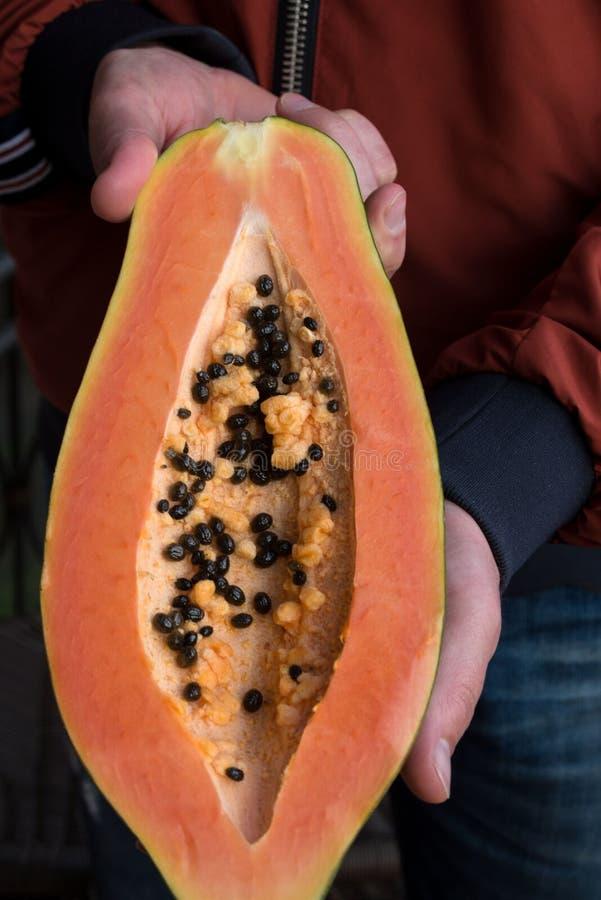 Papayaen Carica papaya ?r en exotisk, smaklig s?t frukt Manliga h?nder som rymmer papayafrukt half royaltyfri fotografi