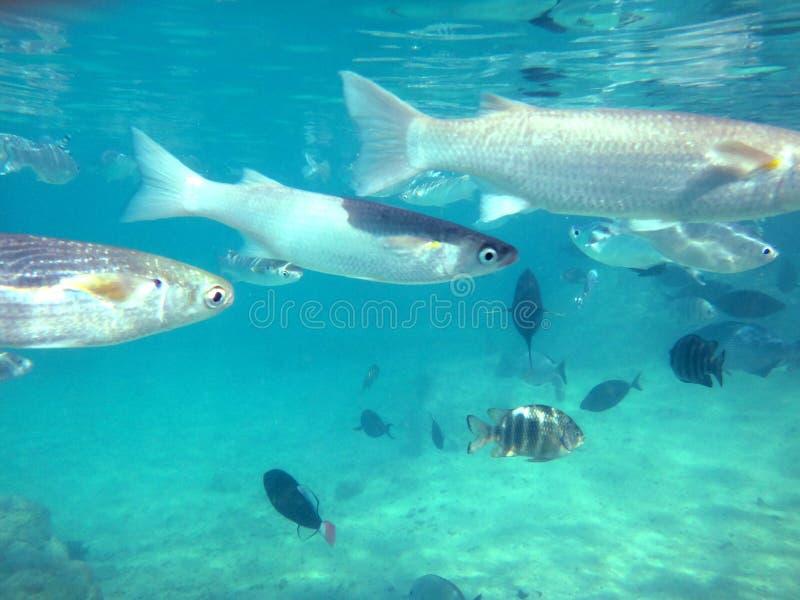 Papeete, Ταϊτή στοκ φωτογραφίες