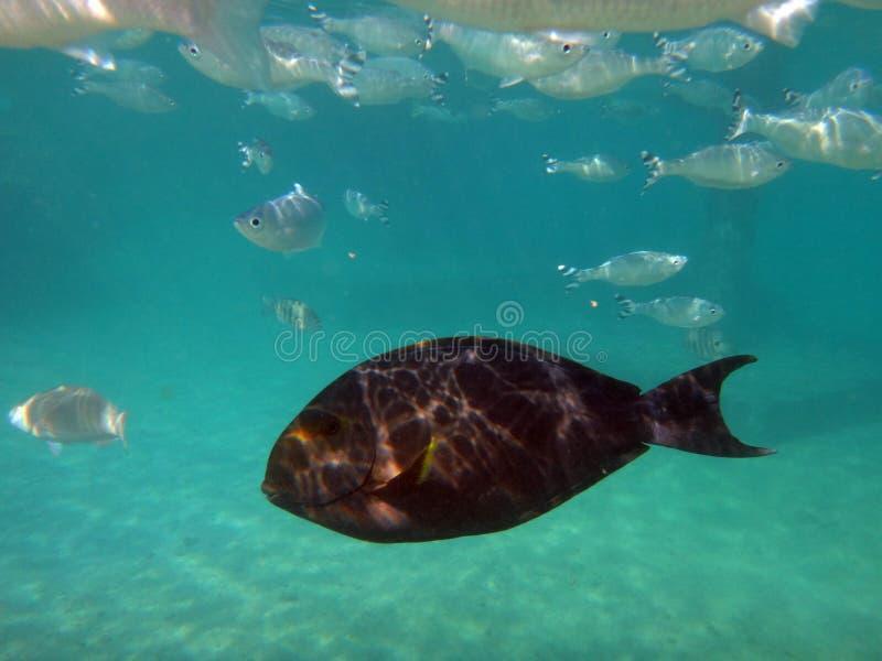 Papeete, Ταϊτή στοκ εικόνες με δικαίωμα ελεύθερης χρήσης