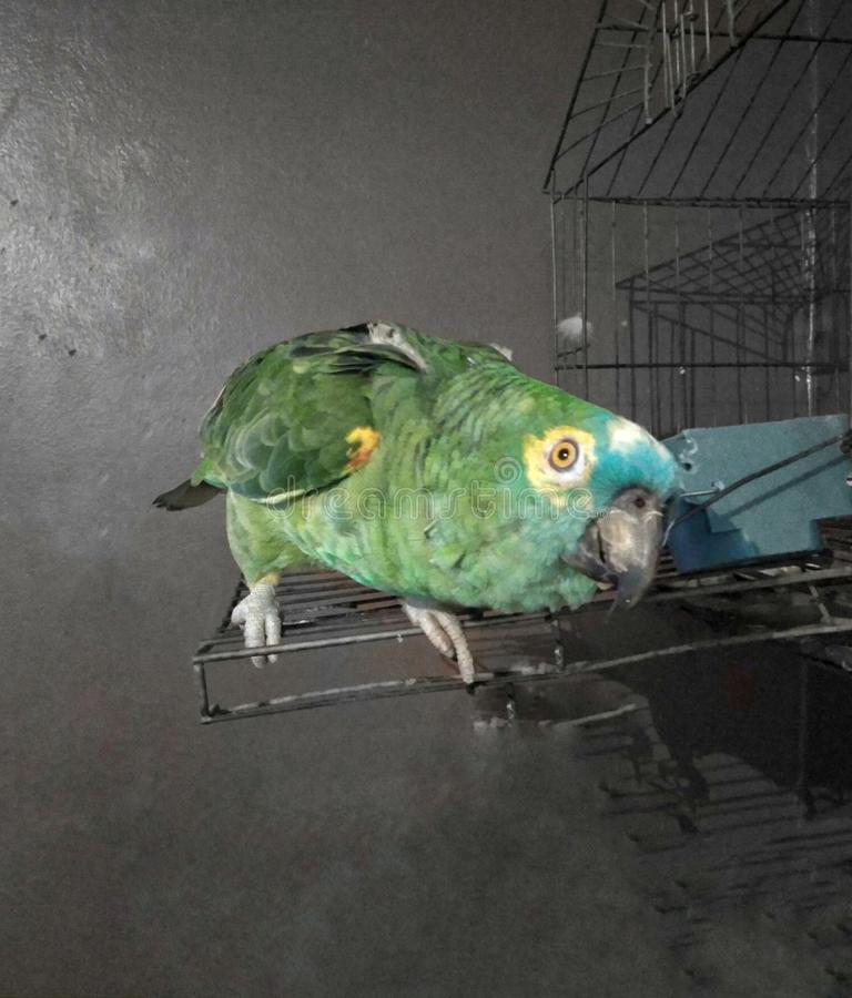Papegaai royalty-vrije stock foto's