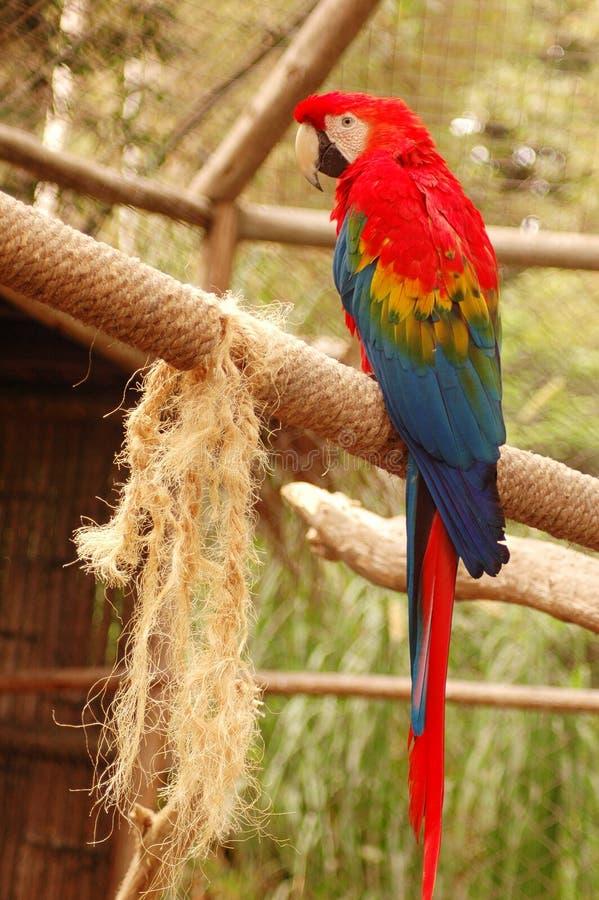 Papegaai #3