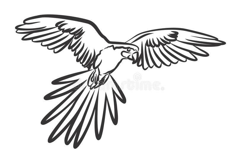 Papegaai vector illustratie