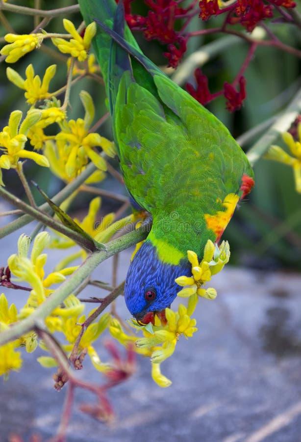 Papegaai in Botanische tuin royalty-vrije stock foto