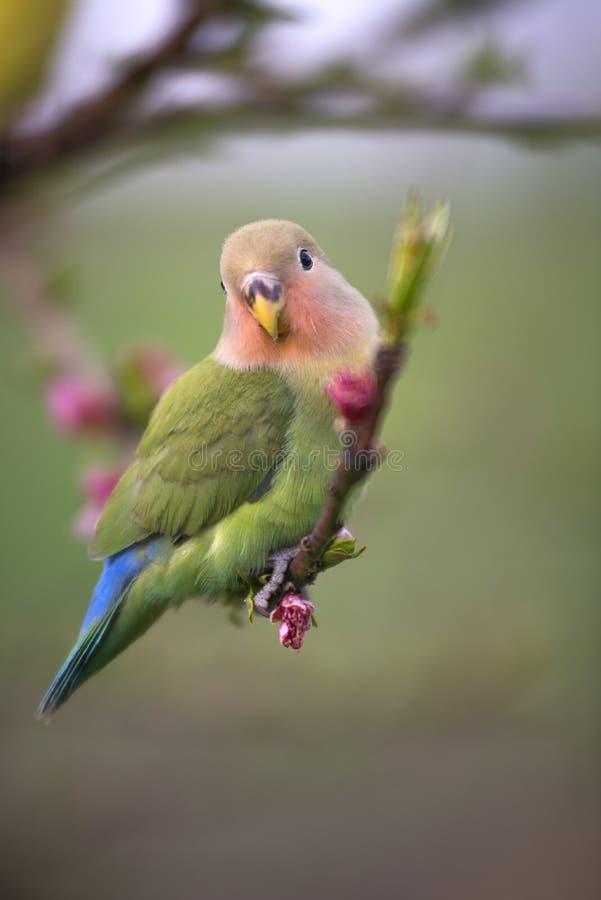 Papegaai in de lente stock afbeeldingen