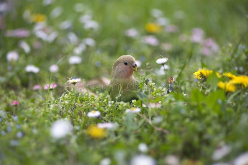 Papegaai in de lente stock foto's