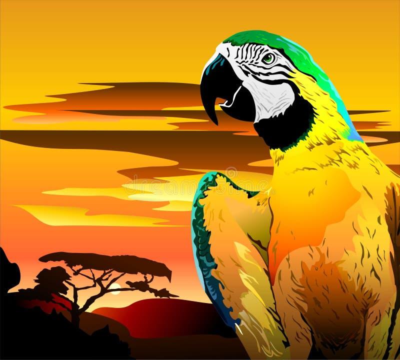 Papegaai in heldere kleuren Vector stock illustratie